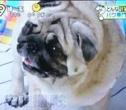 🌻日本テレビ「Zip」で紹介された副業① 家で出来る仕事(ネットショップ)