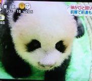 🐼子パンダちゃんの名前が香香(シャンシャン)に決定!🐼