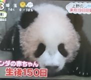 🐼上野動物園パンダのシャンシャン 12月19日に公開!🐼2017年11月13日記