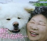 🐕最後に菊谷節子さんがわさお君に与えた優しさとは