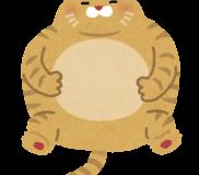 😻【猫問題解決策 / 一般投稿】🐾肥満ネコにアレルギー反応が!!🐾