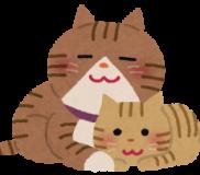 😸猫アレルギーには「二層式洗濯機」がオススメの理由