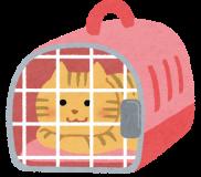😹💉【猫問題解決策 / 一般投稿】🐾猫の病院嫌いを治す方法🐾