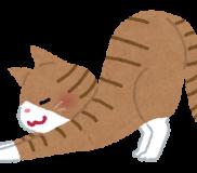 【猫問題解決策 / 一般投稿】🐈猫がどこでも爪とぎをしてボロボロにする問題を解決🐈
