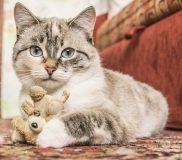 🐱猫との会話🐱2017年6月12日記