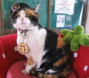 🐾和歌山電鉄で働く4匹の猫たち🐾