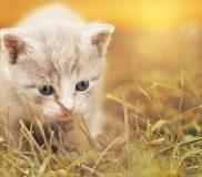 🐶犬も猫も去勢手術はしない事に決定🐱2017年5月28日記