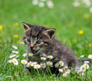 😹猫の病気は人間並み! ペット保険も人間並み!😸
