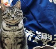 😸浅草演芸ホールのネズミ被害対策係【ジロリ君】のお仕事😸