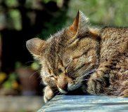 🙀猫アレルギーの症状ってどんな感じ?😸