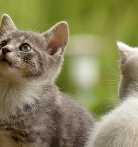😸猫のしつけ方~猫はしつけられない動物だと言うけれど