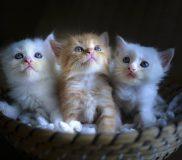 😸猫と暮らす人のための猫アレルギー対策(2018年夏)