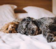 📚【ダイレクト出版PR】5分の準備で夜中ぐっすり寝る方法