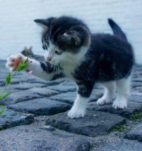 😼臭いを消したい!猫が床にオシッコをした時の対処法