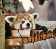 【ダイレクト出版PR】90分で8時間の睡眠を取る方法