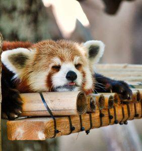 📚【ダイレクト出版PR】90分で8時間の睡眠を取る方法