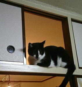 我が家の猫は寝てばかり