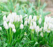 【メモリアルセレモニー】お焼香の仕方・献花の仕方