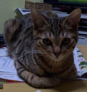 😸うちの猫たち/フーちゃんが家出&新しい家族が増えました