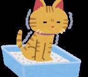 😽猫がトイレ以外の場所でオシッコをするワケは? トイレトレーニングはどうすればいいの?